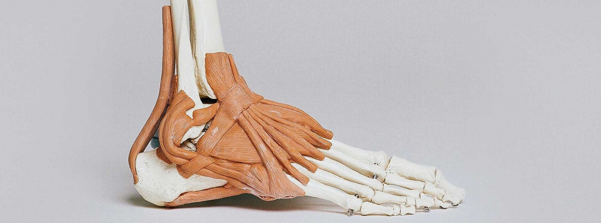 We offer highly specialized physiotherapy services